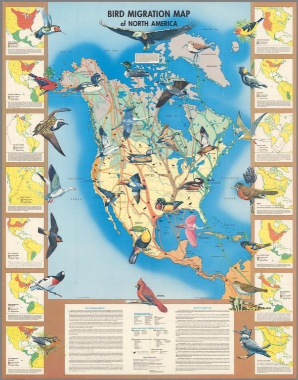 Bird Migration Map of North America.